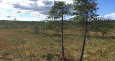 Torronsuo National Park in Tammela Finland