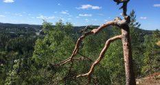 Kanavuori Chicken Mountain