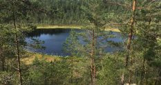 Metsäkoivula trail