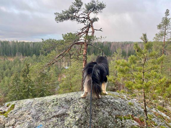 Views from Metsäkoivula trail
