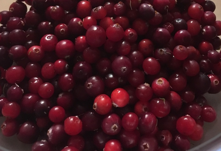 Cranberries freshly picked
