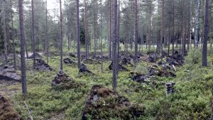 Salpalinja Salpa Line Luumäki Finland