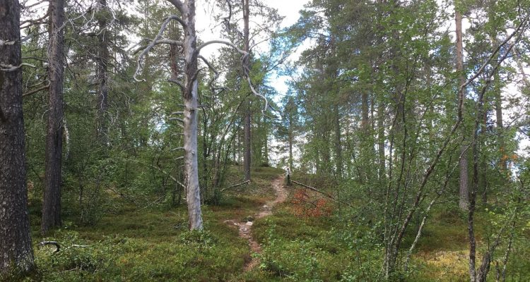Jyppyrä nature trail in Hetta