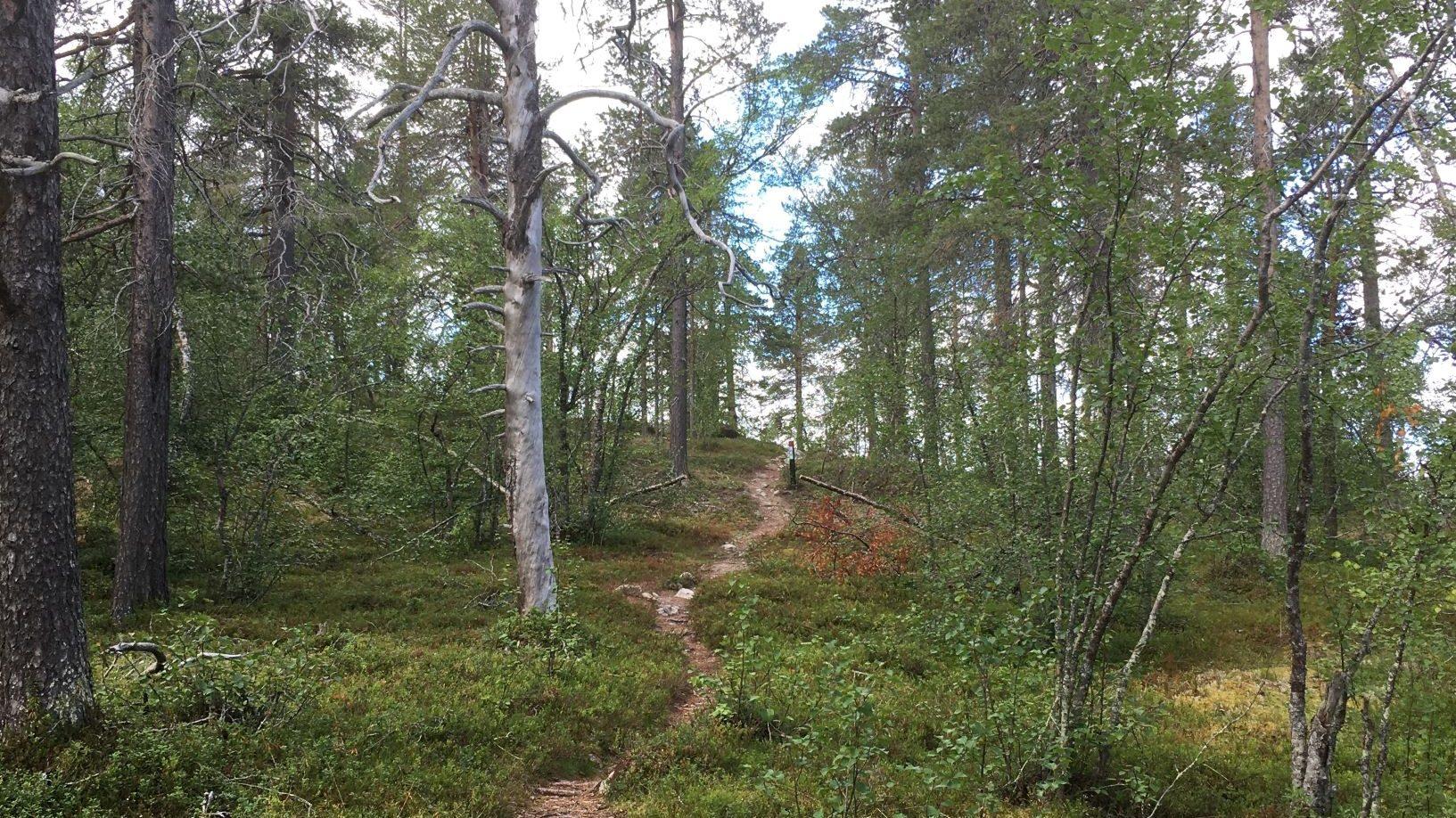Jyppyrä nature trail in Hetta