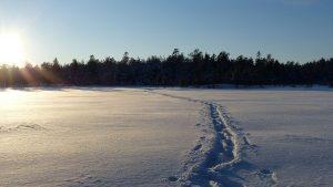 Snowshoeing tracks