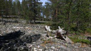 Rumavaara devils field in Pudasjärvi