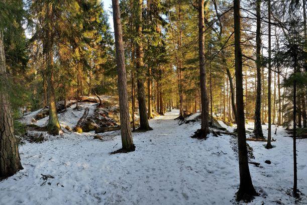 Uutela trails in Vuosaari Helsinki.