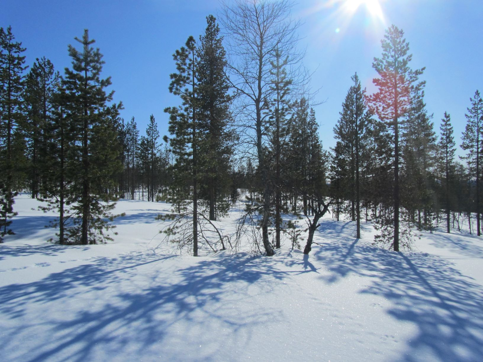 Winter highlights in Finland
