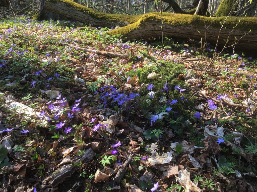 Flowers at Vaisakko
