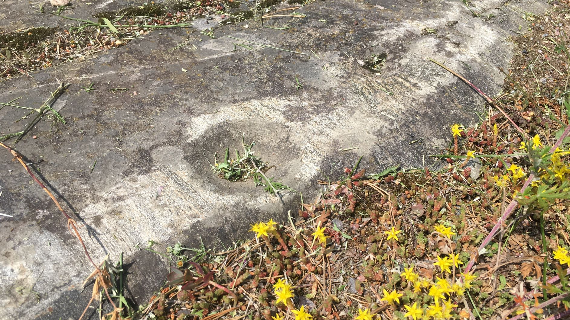 Cup-marked stones in Lohja