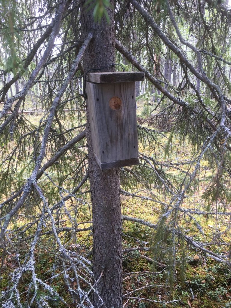 Geocache in a birdhouse