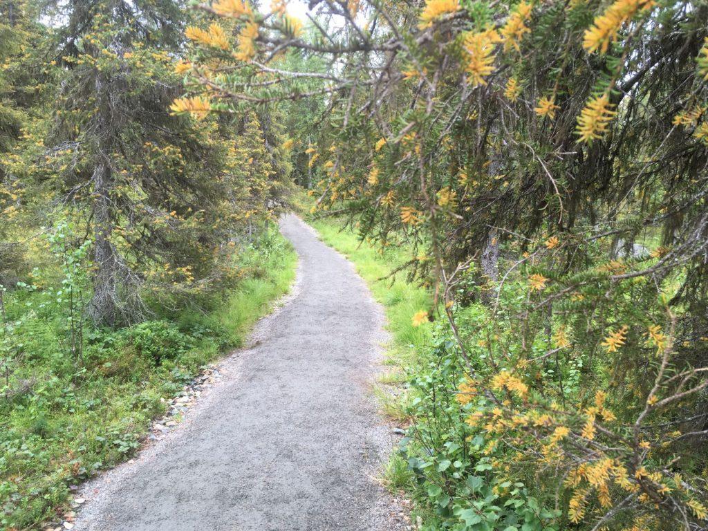 Punainenhiekka Pallasjärvi path