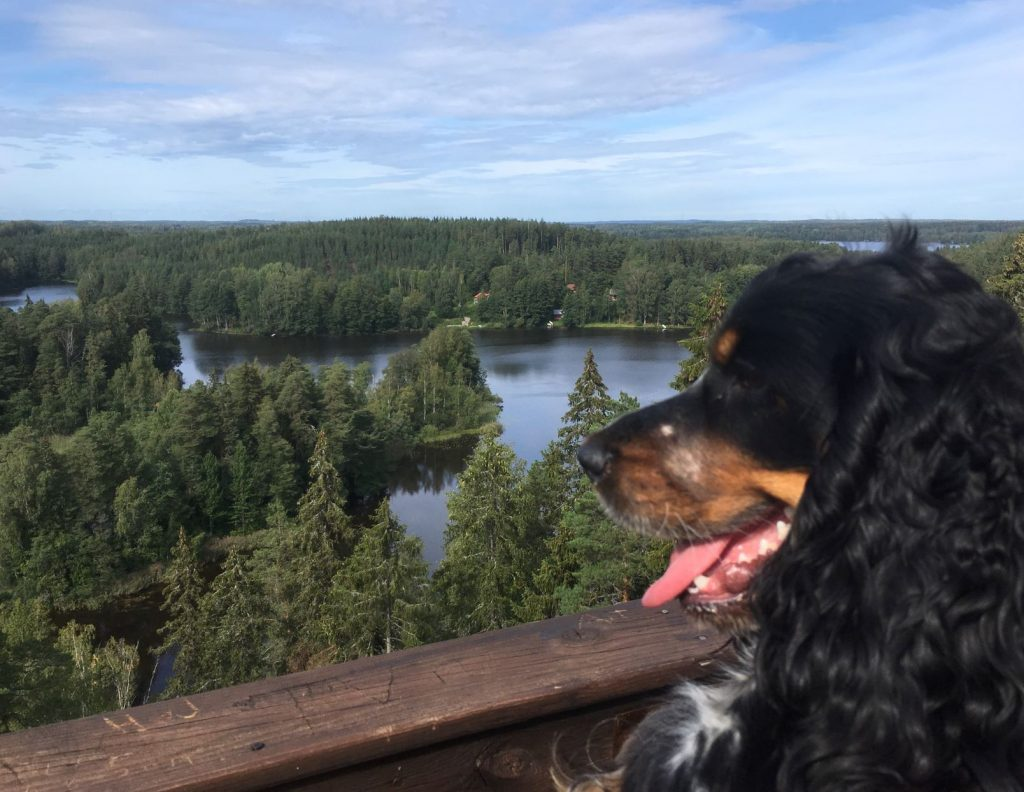 Tessa at Kaukolanharju observation tower