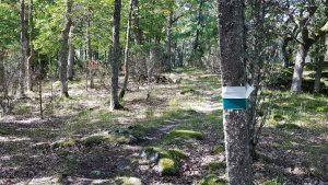 Nature trail in Elisaari