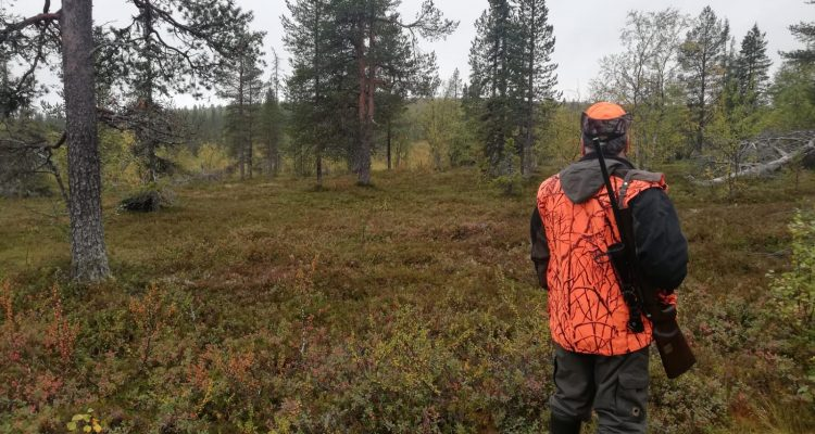Moose hunting in Finland