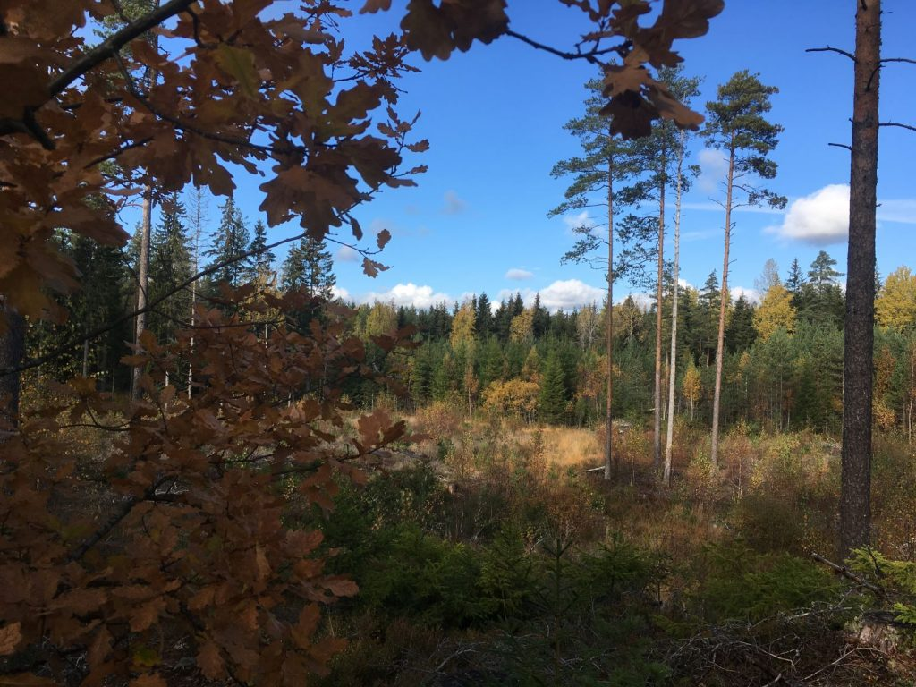 Maaria trails