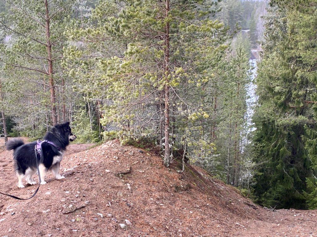 Edge of esker Hevonlinna