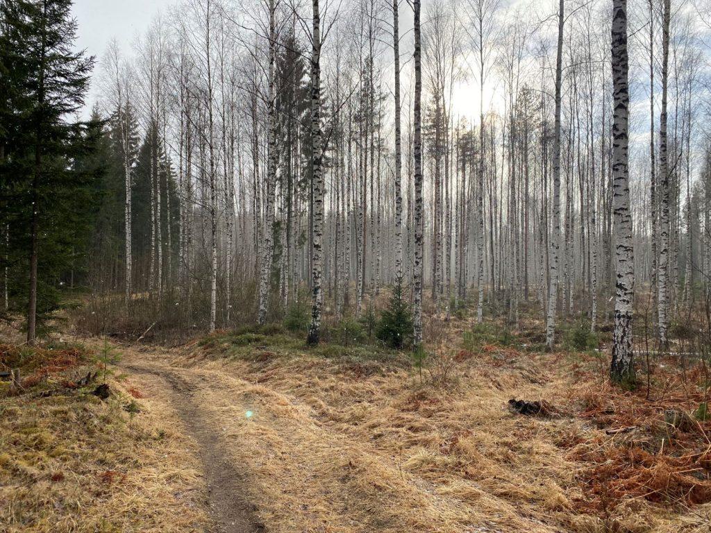 Hovimäki-Esakallio trail 2