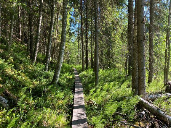 Nature trail Ryövärinkuoppa