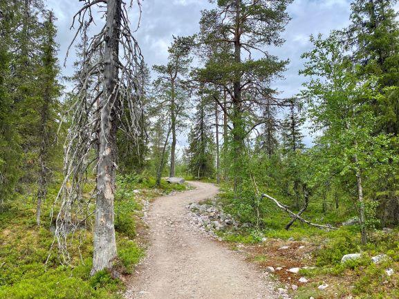 Särkitunturi nature trail