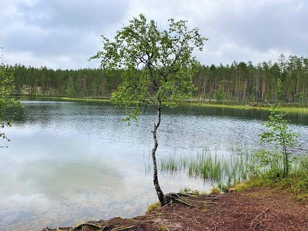 Pitkäjärvi lake in Rokua