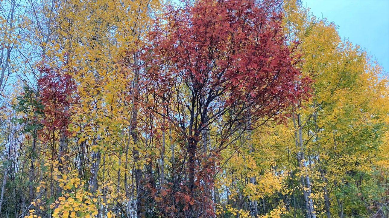 Autumn leaves quiz