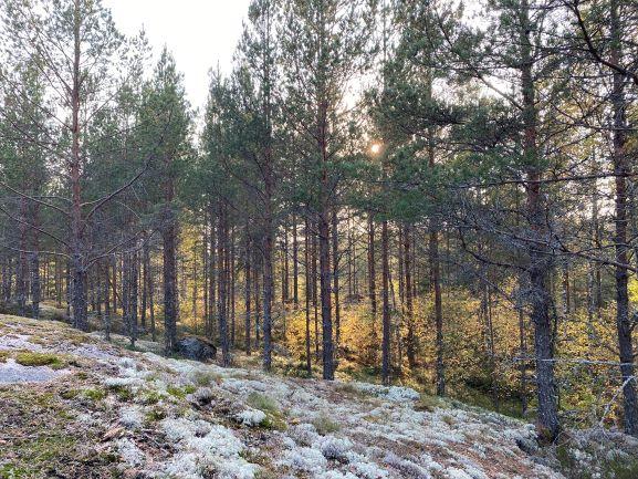 Bergvik forest