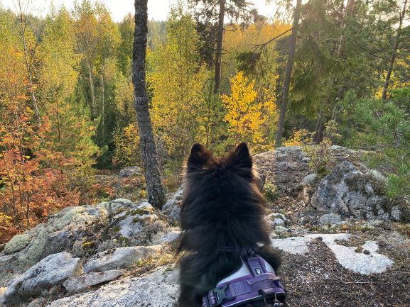 Bergvik nature trail autumn view