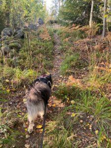 Bergvik nature trail beginning