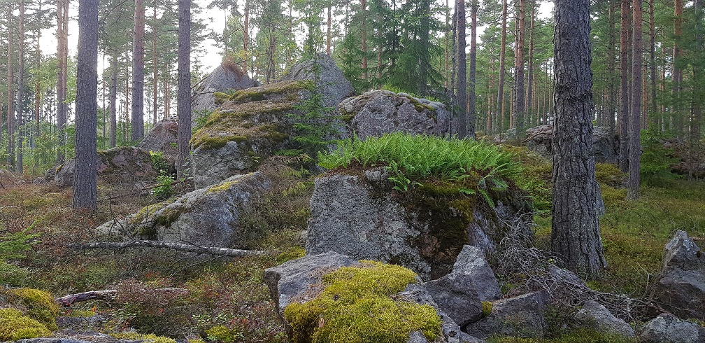 Glacial erratics near Harmaakallio - Valko exercise and skiing track in Loviisa.
