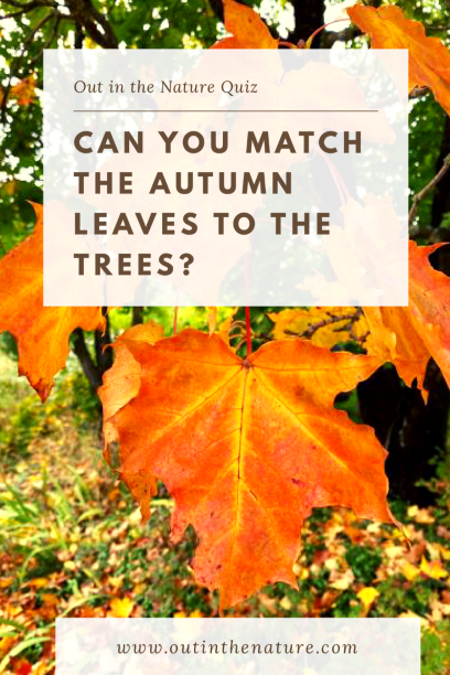 Can you match autumn leaves to the trees
