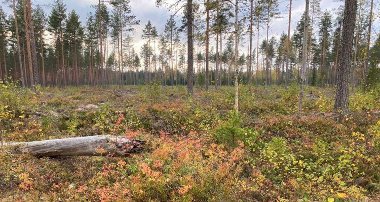 Harjureitti Little Lapland Säkylä