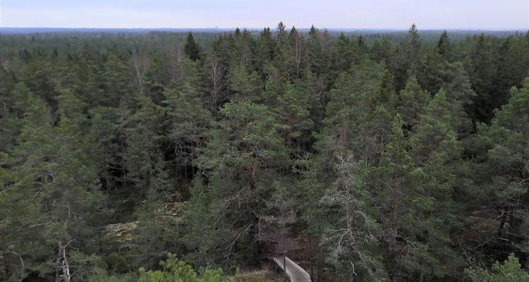 Kullaanvuori view