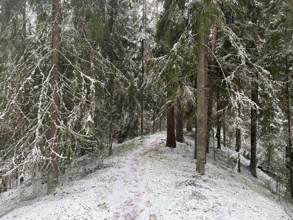 Lynx trail at Kettumäki