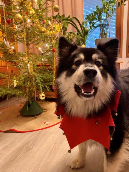 Nalle on Christmas