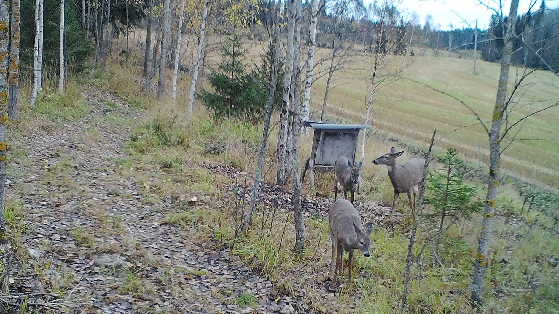Deer hunting in Finland