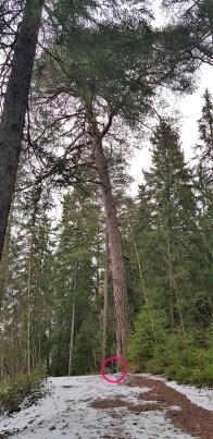 Meri-Rastilan ja Vuosaaren tarinapuu. The story tree of Meri-Rastila and Vuosaari.