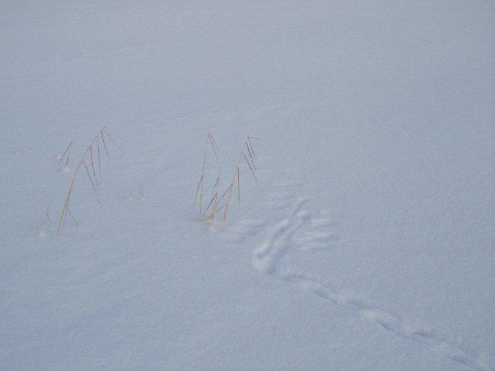 Bird tracks on the snow