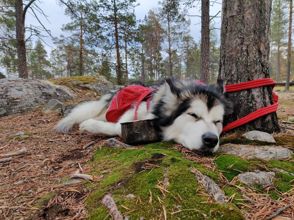 Resting at UKK