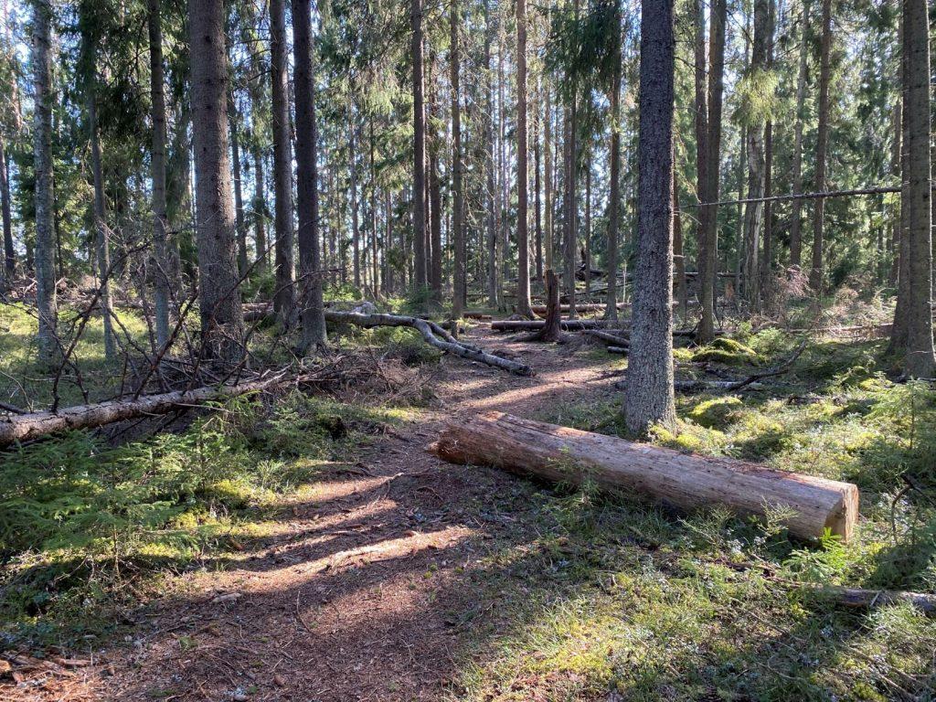 Fallen trees at Heinisuo