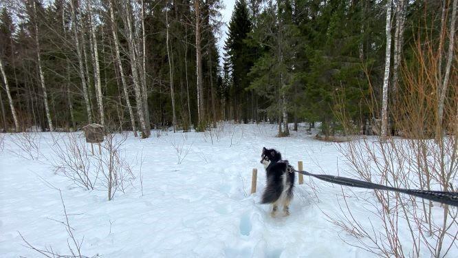 Heinäjoki nature trail in winter
