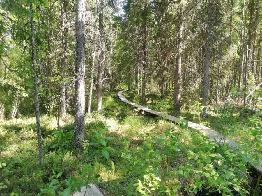 Heinäjoki nature trail in summer