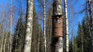 Making birdhouses