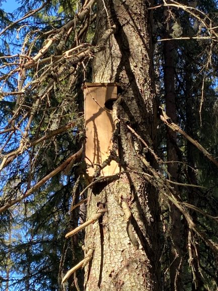 Treecreeper house