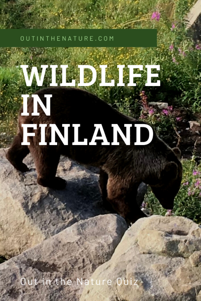 Pin it! Wildlife in Finland Quiz
