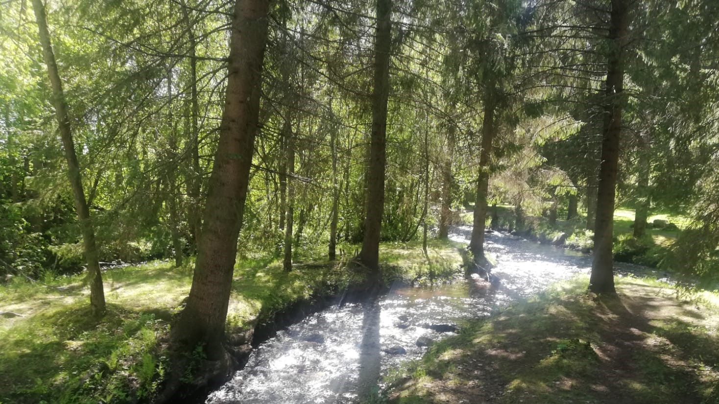 Alakestilä Arboretum in Liminka