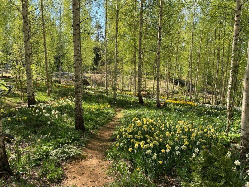 Pölkinvuori flower garden