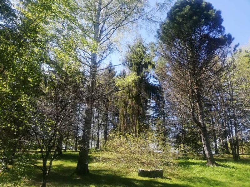 Trees at Alakestilä Arboretum 2