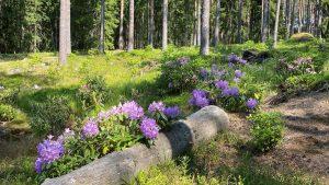 Ilola Arboretum and Rhododendron Park