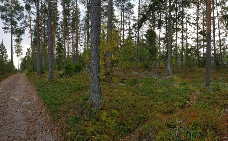 Gravel road by the Kasnäs ancient shoreline. Hiekkatie Kasnäsin muinaisrannan pirunpellon vieressä.